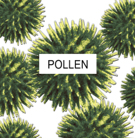 Magnified Photo of Pollen